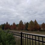 Lakecrest Forest064